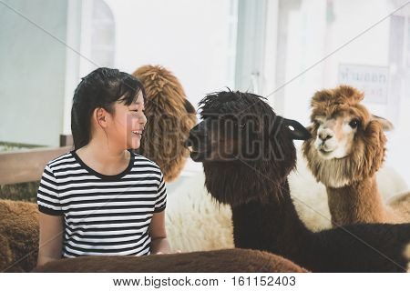 Cute Asian girl playing with cute alpaca