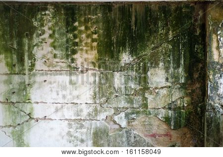 Black and green fungal mold wall abandoned