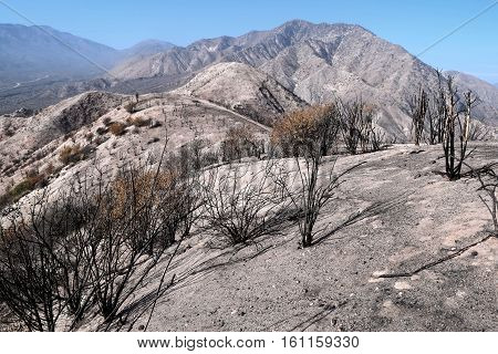 Charcoaled landscape with burnt chaparral plants caused from a wildfire taken in the Cajon Pass, CA
