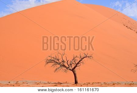 dry tree against sand dune and sky