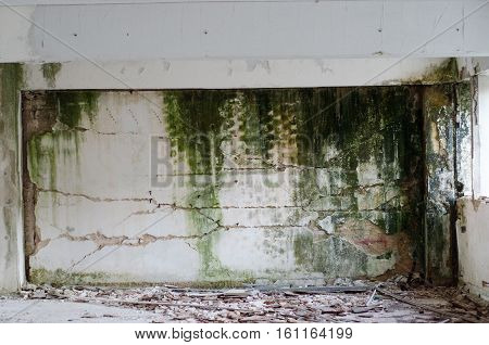 Leak fungal mold old wall heavy damage