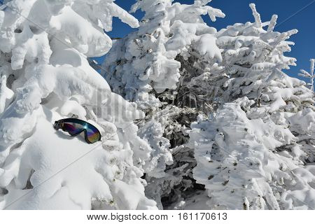 Nival background with goggles full frame of fir trees covered by snow and forgotten goggles Mt .Kopaonik Serbia