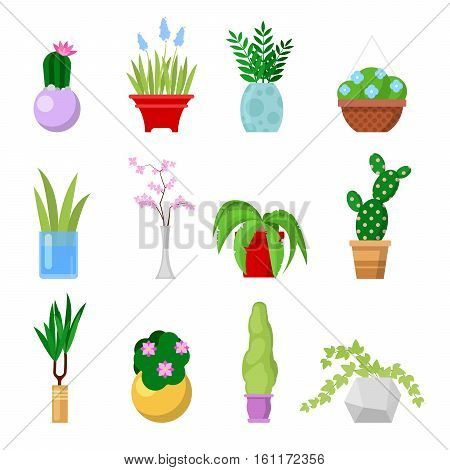 Potted Home Plants Set. Decorative Houseplants and Flowers in Pots. Vector illustration