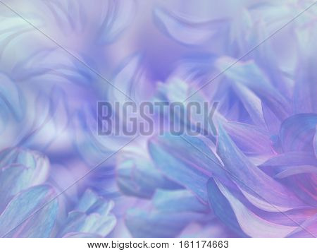 flower petals on a blurred blue-violet colorful background. floral composition. floral background. Nature.