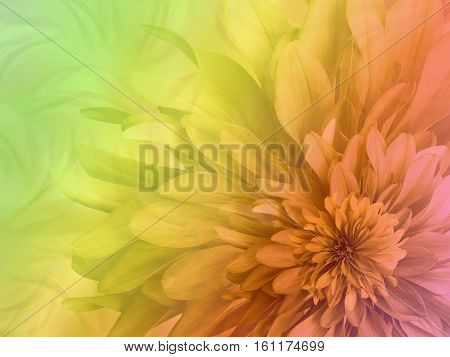 shaggy flower on a variegated transparent background. floral composition. floral background. Nature.