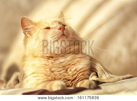Cute fluffy cat on blurred background, close up view