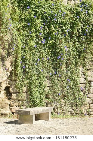 Stone bench next to a wall covered of a climbing plant with mauve flowers in Tui Galicia Spain.
