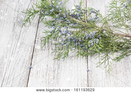 Thuja twigs on wooden background copy space