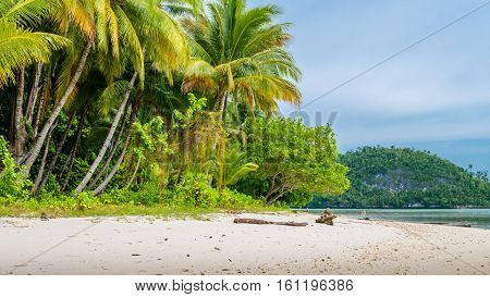 Wild coconat Palms on Friwen Island, Wall in Background, West Papuan, Raja Ampat. Indonesia