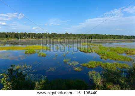 clouded morning on swamp, with sky reflection in Estonia