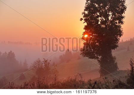 Foggy Rural Scene. Misty Morning In Mountains