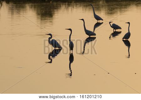 Birds Reflected On Water. Brazilian Wildlife