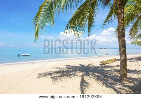 Palm tree casting shadows at beach in Penang, Malaysia Asia