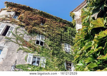 creeper plants on buildings in eze village