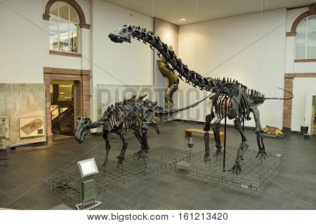 Frankfurt, Germany - April 25, 2016. Interior view of Senckenberg Museum in Frankfurt, with casts of Diplodocus and Iguanodon, information boards and other exhibits.