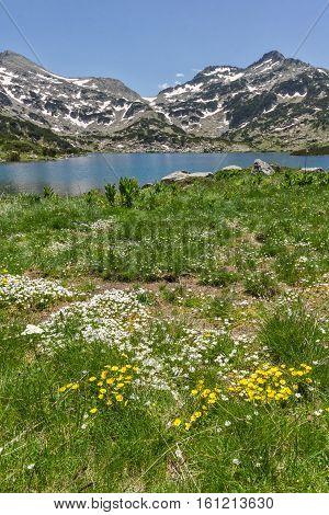 Amazing landscape of Demirkapiyski chukar peak, Popovo lake and yellow flowers in front, Pirin Mountain, Bulgaria