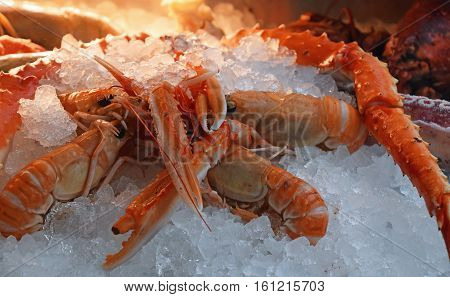 Fresh Catch Of Langoustine Lobsters On Ice