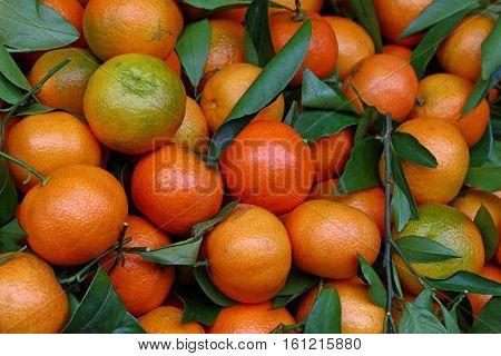 Fresh Ripe Mandarin Oranges With Green Leaves