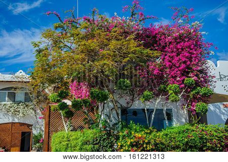 tropical alcove in red sea location egypt red flowers