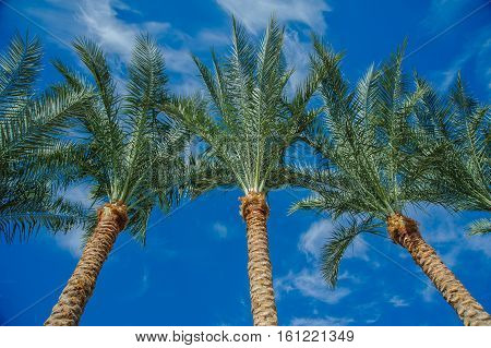 palms green blue sky tropical view background