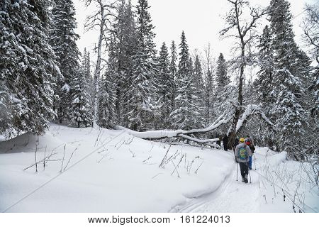 Group of trekkers walking on snow trail in winter forest.