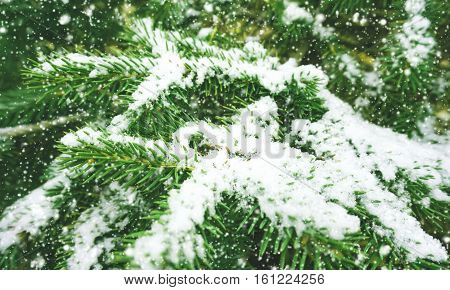 Snow on tree beautiful natural of winter background