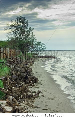 Sea Beach after the storm. Gloomy skies. Cold weather. At the edge of the sea on pese are taken out from the root. On the shore is a maritime village. Wooden fence is broken. Wind rustles green grass and tree. Sea hectic. On the sky clouds.