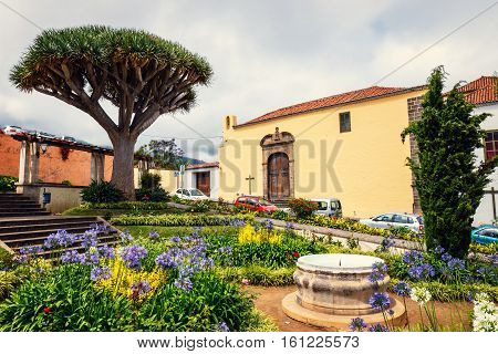 The Historical Center Of La Orotava Town With Drago Tree, Tenerife Island, Spain