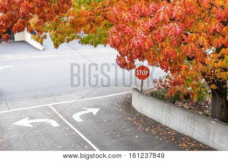 Fall color over the entry to the street, with a stop sign and turn direction arrows