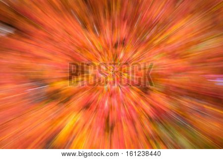 Fall color, abstract leaf zoom blur effect
