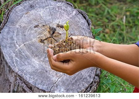 Hand of boy and young plant on cut of old and crack wooden use for a background,touch -up in new hope of green earth concept