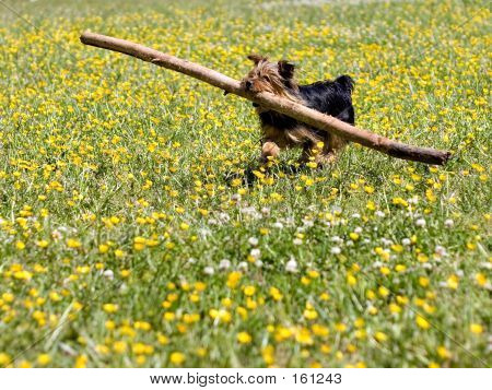 poster of little dog with big stick