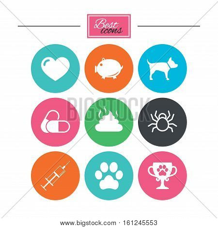 Veterinary, pets icons. Dog paw, syringe and winner cup signs. Pills, heart and feces symbols. Colorful flat buttons with icons. Vector