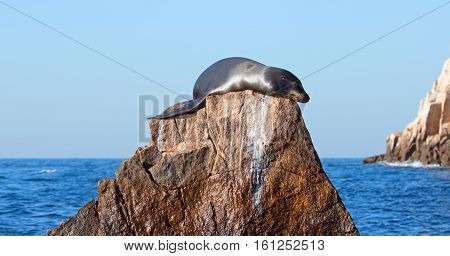 California Sea Lion sunning himself on the Pinnacle rock of Lands End at Cabo San Lucas Mexico B C S