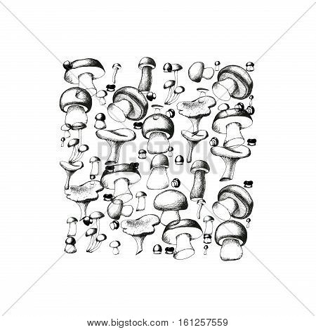 Hand drawn black and white mushrooms arranged in a shape of square. Vector doodle monochrome illustration. Boletus, chanterelle, agaric and russala.