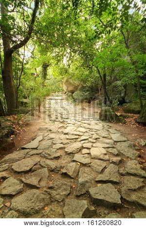 Trail \ bright summer photo Yalta Crimea