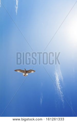the flight of a soaring bird in the sky / lazy photography bright clear Sunny sky