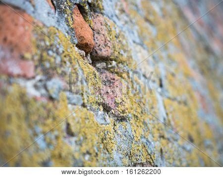 Close up on an old brick wall texture, focus on the middle of the wall. Background of the yellow moss covering the brickwall close up.