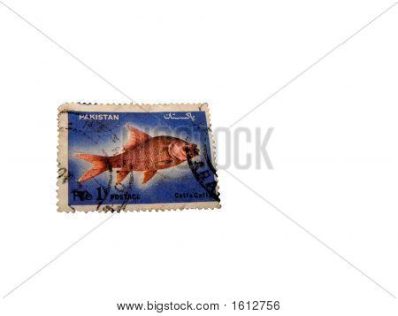 Postal Stamp Of Pakistan Of Seventies Showing Catla Fish