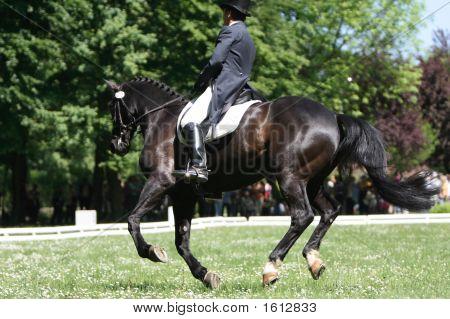 Elegant Man Riding Black Horse