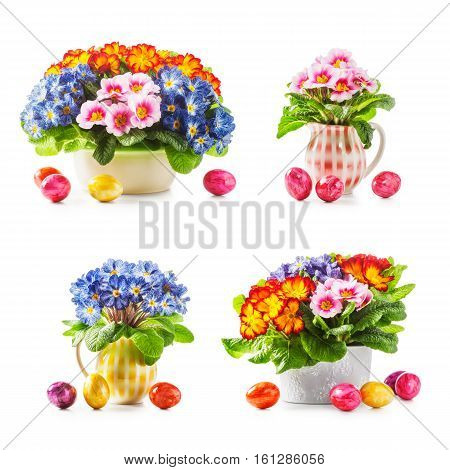 Spring primula flowers and easter eggs collection isolated on white background. Holiday symbol