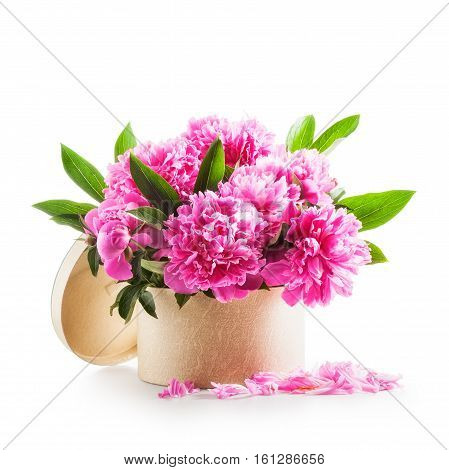 Peony flowers. Romantic bouquet of pink peonies in gift box isolated on white background clipping path included. Holiday present