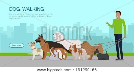 Dog walking banner. Man walks with Golden Retriever, Jack Russell Terrier, Maremma Sheepdog, German Shepherd, Pekingese, Fox Terrier breeds. Dog pet shop banner poster. Vector.