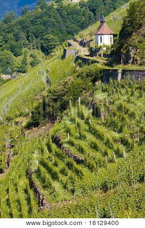 grand cru vineyard and Chapel of St. Urban, Thann, Alsace, France