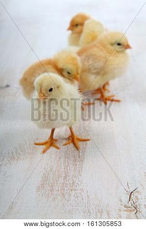 Fluffy Little Yellow Chickens On A  Wooden Background. Card For Easter.