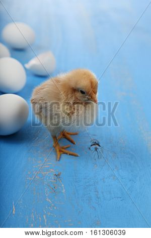 Fluffy Little Yellow Chickens And Eggs  On A Blue Wooden Background. Card For Easter.