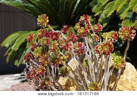 Beautiful green and red succulent plants and palm trees