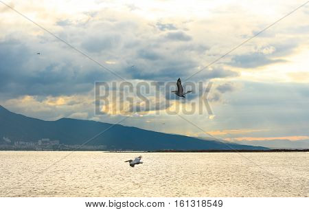 Sun between clouds and  pelicans flying on the sea at dusk in Izmir - Turkey.