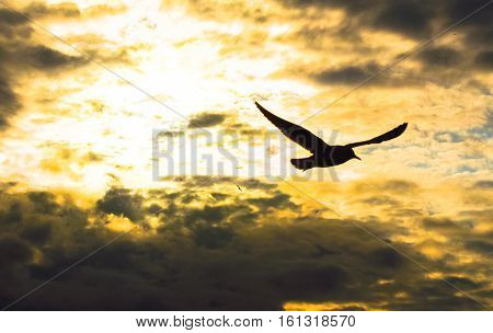 Seagull flying at sunset sky, silhouette. Sun between clouds a seagull flying.
