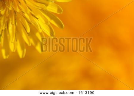 An extreme macro of the center of a dandelion. This image is intended to be a soft focus abstract so as to be a beautiful background without being too distracting and busy. poster
